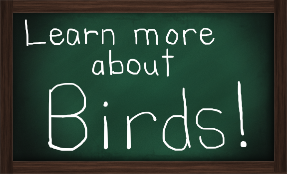 learn Birds greenboard