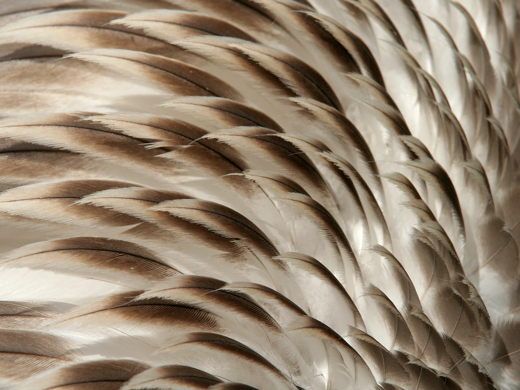 How Feathers Insulate