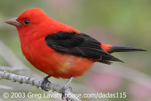 Do Birds See Color Birdnote