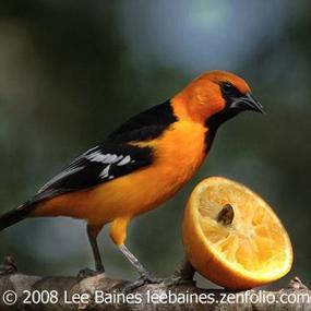 http://cts.vresp.com/c/?BirdNote/f8b8f8fbeb/b0eaa8d8cc/78d52f5dba