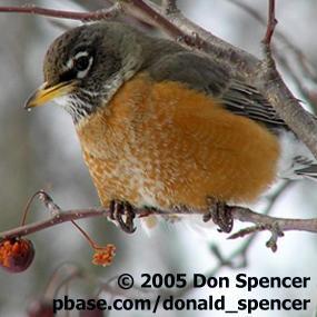http://cts.vresp.com/c/?BirdNote/a45dd2d36b/b0eaa8d8cc/eaa99e0db5
