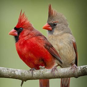 http://cts.vresp.com/c/?BirdNote/8e16b34c8a/b0eaa8d8cc/5be0b00793