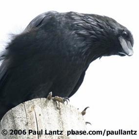 http://cts.vresp.com/c/?BirdNote/d14541cdc6/b0eaa8d8cc/d775da9cdf