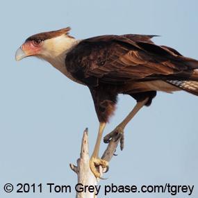 http://cts.vresp.com/c/?BirdNote/f53bc90780/b0eaa8d8cc/88688662ab