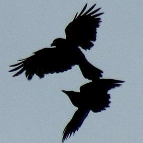 http://cts.vresp.com/c/?BirdNote/03be1bfe74/b0eaa8d8cc/3d365cbf76