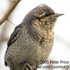 http://cts.vresp.com/c/?BirdNote/b742fa4b68/b0eaa8d8cc/d803c10a88