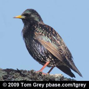 http://cts.vresp.com/c/?BirdNote/571144a245/b0eaa8d8cc/226fd86938