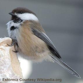 http://cts.vresp.com/c/?BirdNote/f8b8f8fbeb/b0eaa8d8cc/0744abc27e