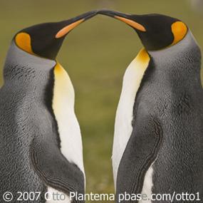 http://cts.vresp.com/c/?BirdNote/505f4f1947/b0eaa8d8cc/7d41523524