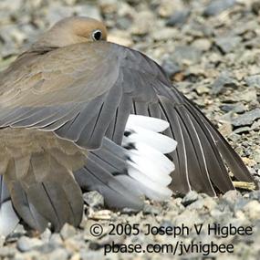 http://cts.vresp.com/c/?BirdNote/8e16b34c8a/b0eaa8d8cc/e02c4d3bf4