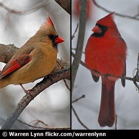 http://cts.vresp.com/c/?BirdNote/d14541cdc6/b0eaa8d8cc/a8367f669f