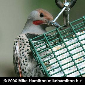 http://cts.vresp.com/c/?BirdNote/63b064becf/b0eaa8d8cc/6b401c9202