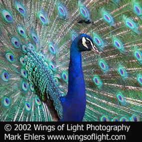 http://cts.vresp.com/c/?BirdNote/8e16b34c8a/b0eaa8d8cc/a33fb11e67