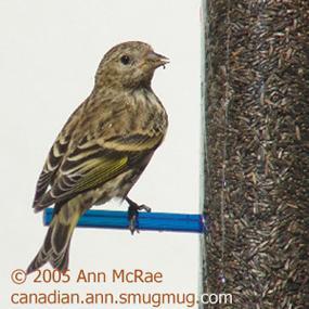 http://cts.vresp.com/c/?BirdNote/6cd25a507a/b0eaa8d8cc/9f06baf77d