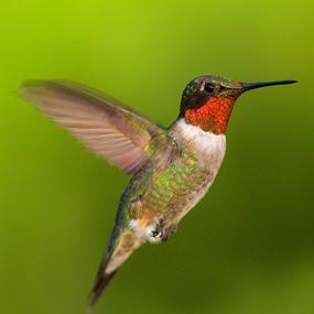 Eastern-Bluebirds-Podcast-JanetAndPhil-285