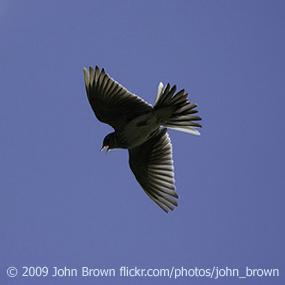 http://cts.vresp.com/c/?BirdNote/4b33d01452/b0eaa8d8cc/0b18f4ed10