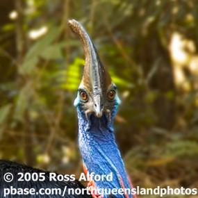 http://cts.vresp.com/c/?BirdNote/823b3517ca/b0eaa8d8cc/2ba3bfe716
