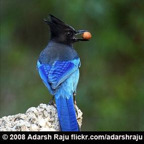 http://cts.vresp.com/c/?BirdNote/44372e126f/b0eaa8d8cc/d431fc7901