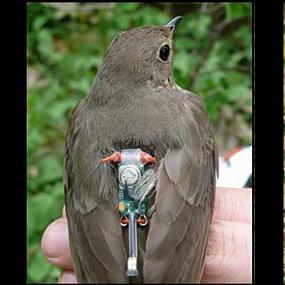 http://cts.vresp.com/c/?BirdNote/6d6b3f0deb/b0eaa8d8cc/e10be608a7