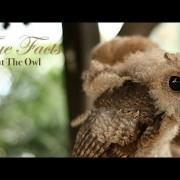 True Facts About The Owl