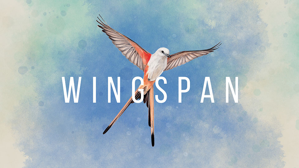 "Illustration of a Scissor-tail flycatcher in the sky with the text ""Wingspan"""