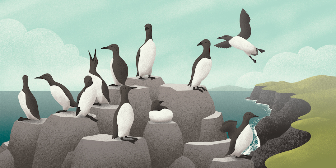A Riot of Nesting Seabirds