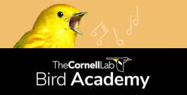 Cornell Lab of Ornithology Bird Academy - the Joy of Birdwatching
