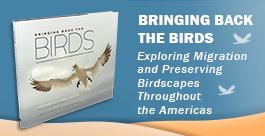 Bringing Back the Birds - American Bird Conservatory, photography by Owen Deutsch