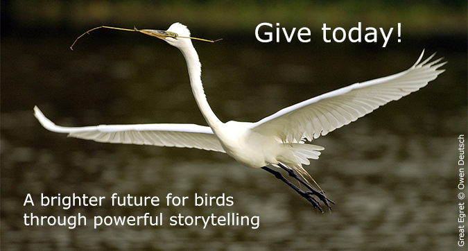 Fall Appeal Donate Great Egret