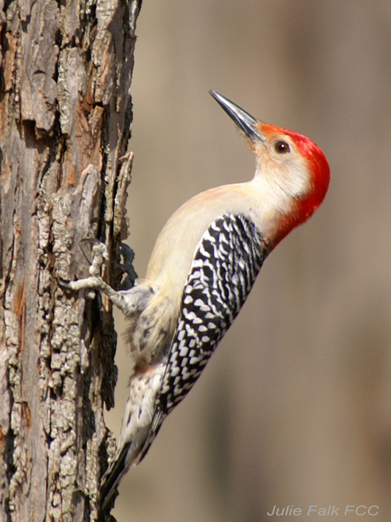how to keep woodpeckers away from chimney