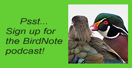 Pssst - sign up for the BirdNote podcast!