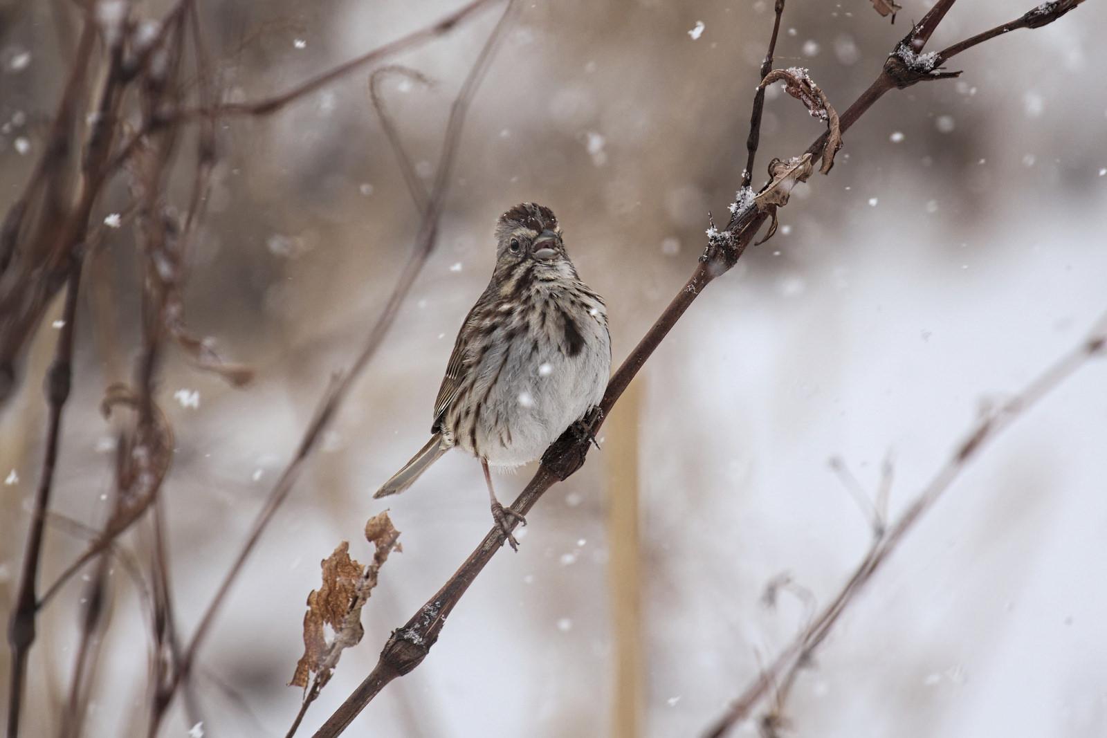 birds in the winter garden birdnote