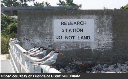 Great Gull Island