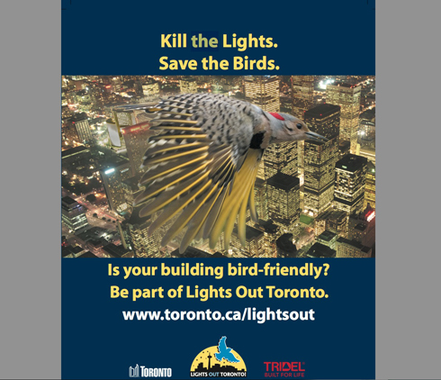 Lights Out Toronto - Saving Birds | BirdNote