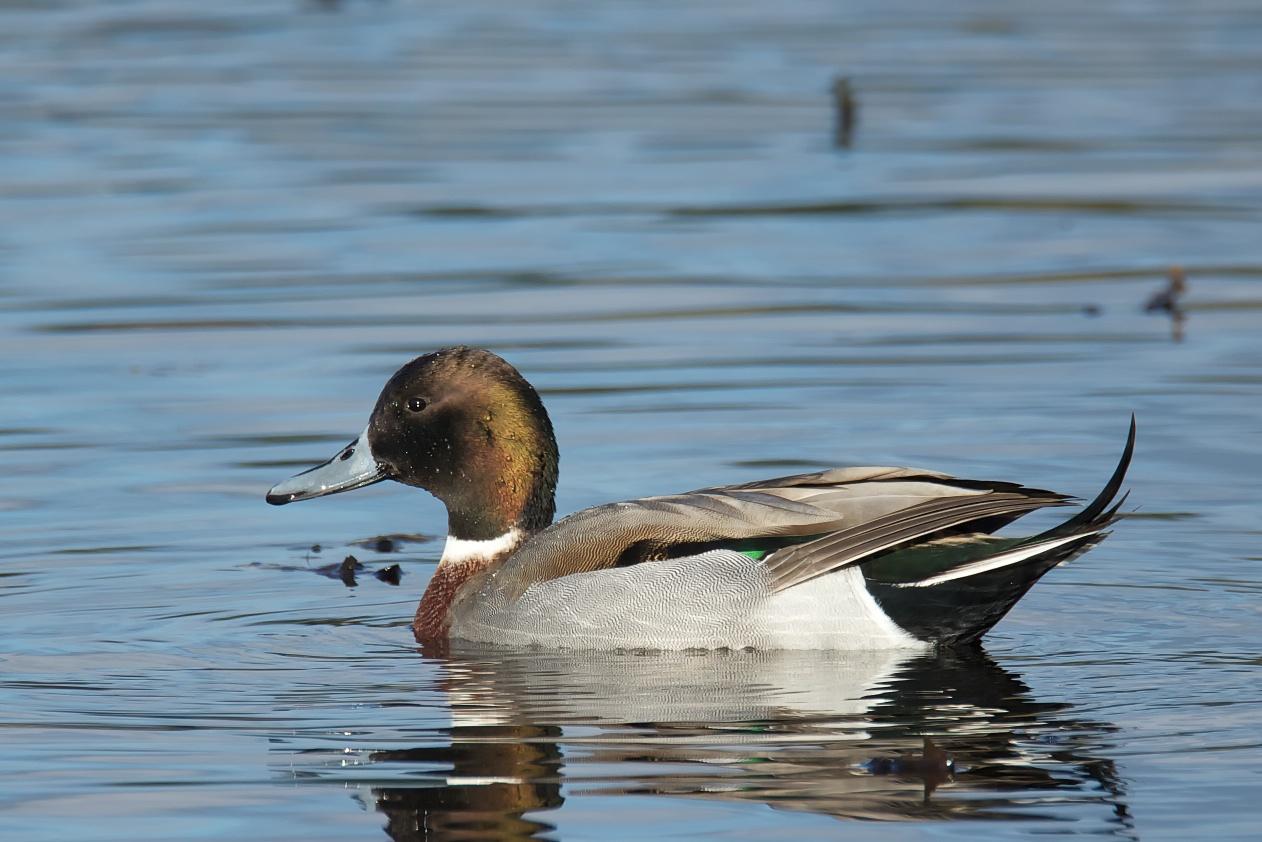 Why Birds Feet Dont Freeze Birdnote