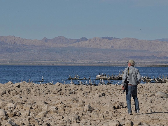 Birds Winter at the Salton Sea | BirdNote
