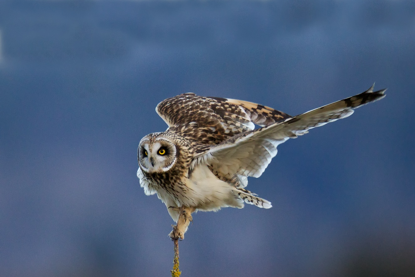 What's Up with That Owl? Casting Pellets... | BirdNote