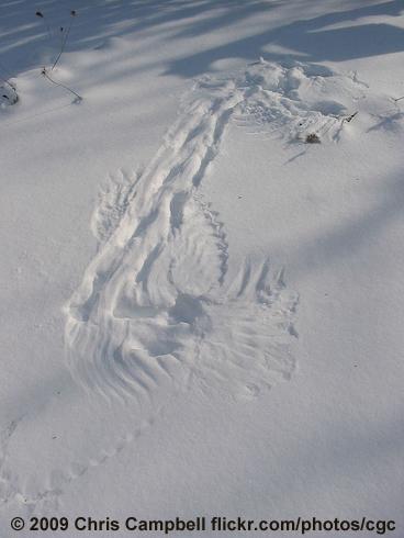 Bird Tracks In The Snow Birdnote