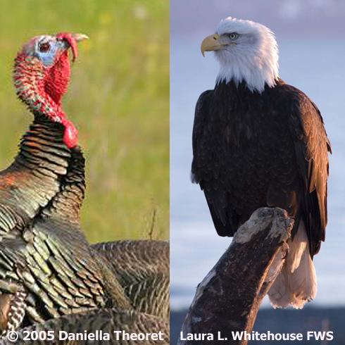 National Symbol Turkey Vs Eagle Birdnote