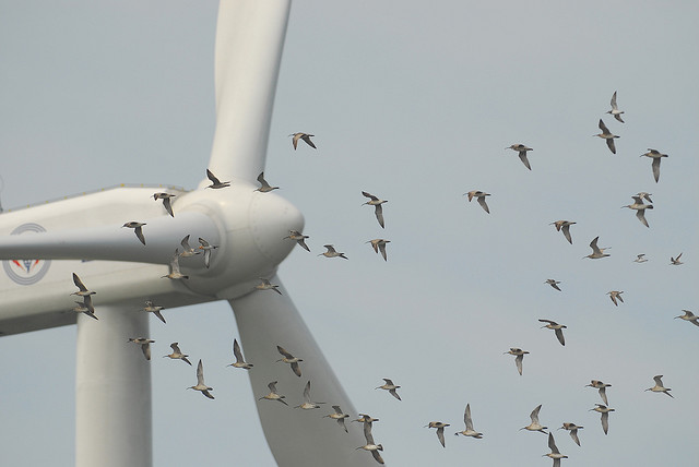 Image result for birds and wind turbines