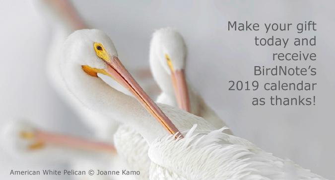 Donate today and receive BirdNote's 2019 calendar