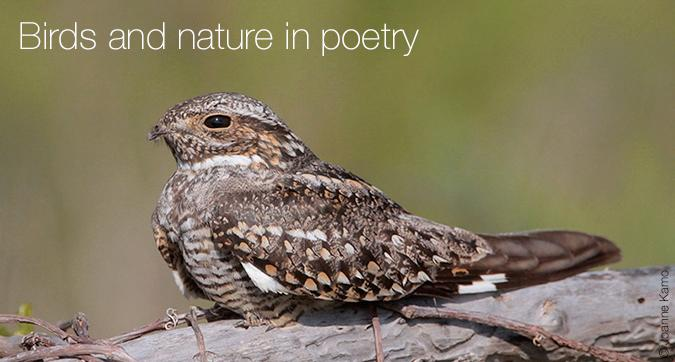 Birds and nature in poetry