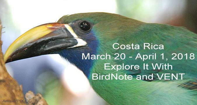 Emerald Toucanet Costa Rica VENT travel trip