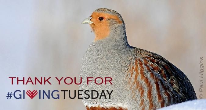 donate giving tuesday THANKS THANK YOU