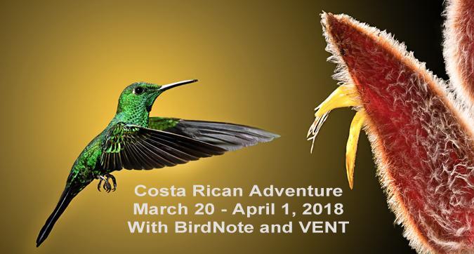 Green-crowned Brilliant Costa Rica