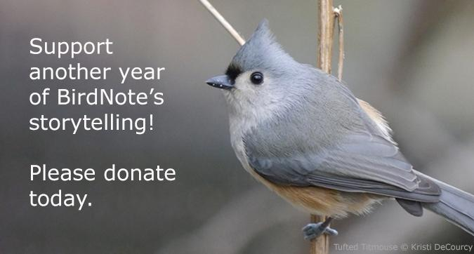 Give to BirdNote today
