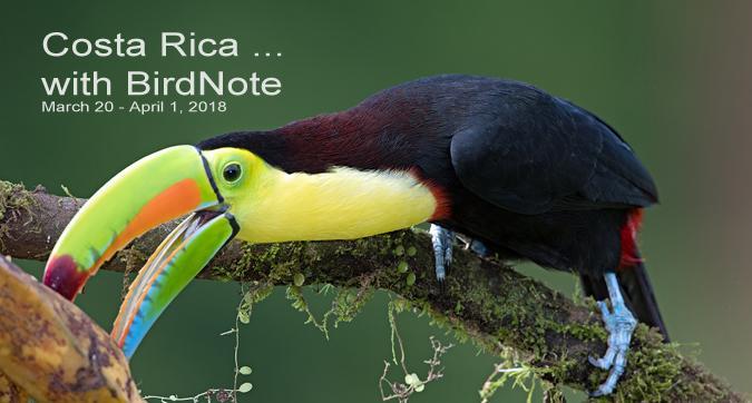 keel-billed toucan costa rica travel