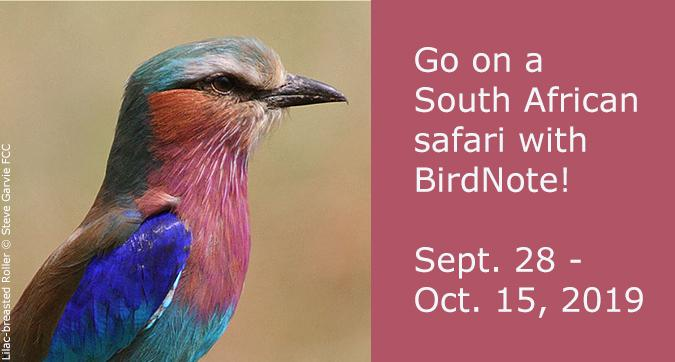 Go on a South Africa adventure with BirdNote! Sept. 28 – Oct. 15, 2019