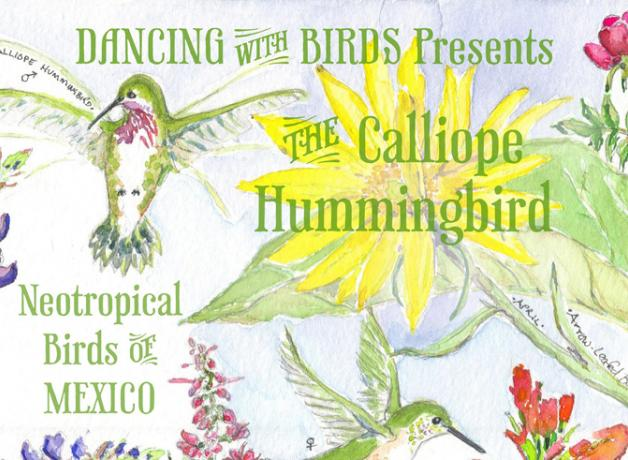 Dancing with Birds poster