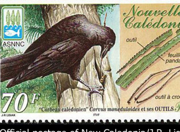 New Caledonian Crow stamp